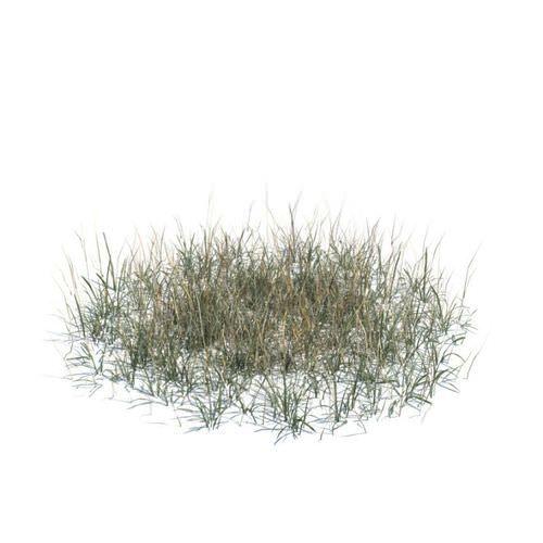 long dry grass 3d model obj 1 | Trees & grass | Grass