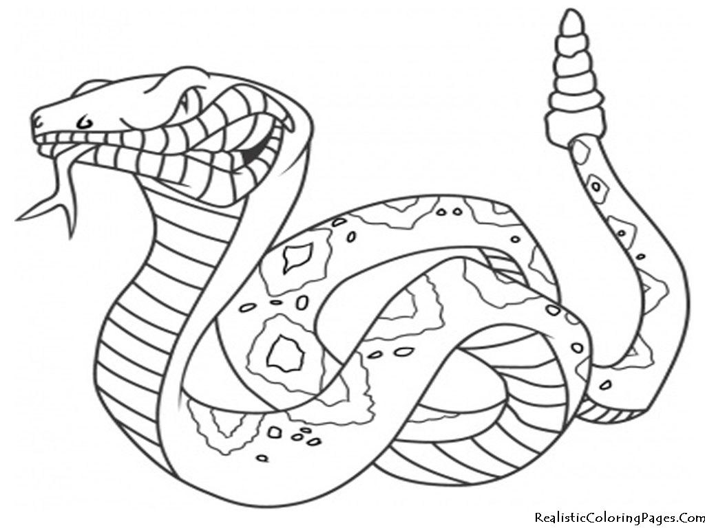 Realistic Coloring Pages Of Snakes Realistic Coloring Pages Art