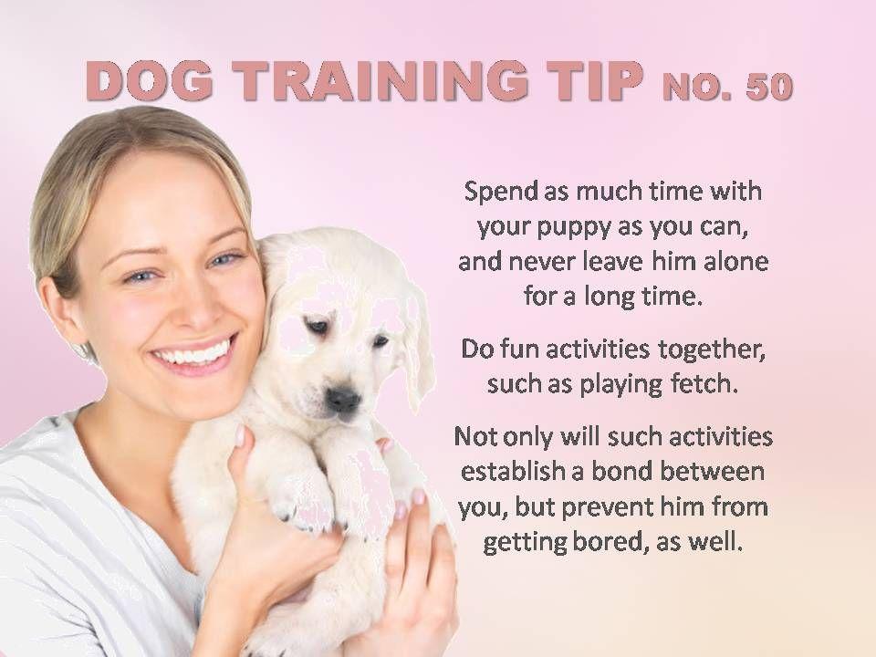 Dog Training Tip Dogtraining Dog Training Tips Dog Training