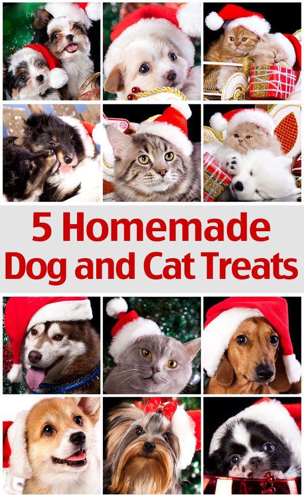 5 Homemade Treats Recipes For Your Dog And Cat Homemade Dog