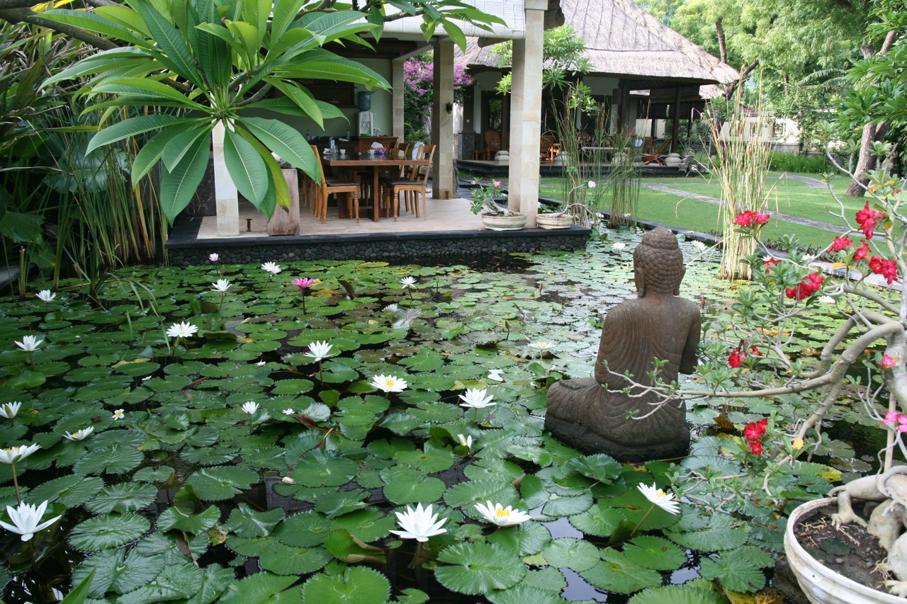 The pond is full of lilies...Villa Semadhi Pemuteran | buddha, zen ...