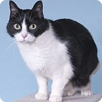 Adopt A Pet Harriett Chicago Il With Images Kitten Adoption Cat Adoption Pets