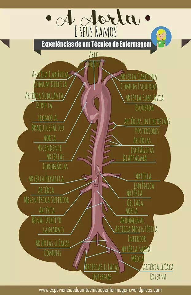 Pin de Margot en Corazon | Pinterest | Medicina, Enfermería y Anatomía