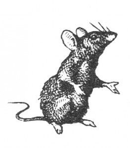 Free Vintage Graphic - Tiny Mouse Clip Art - The Graffical Muse
