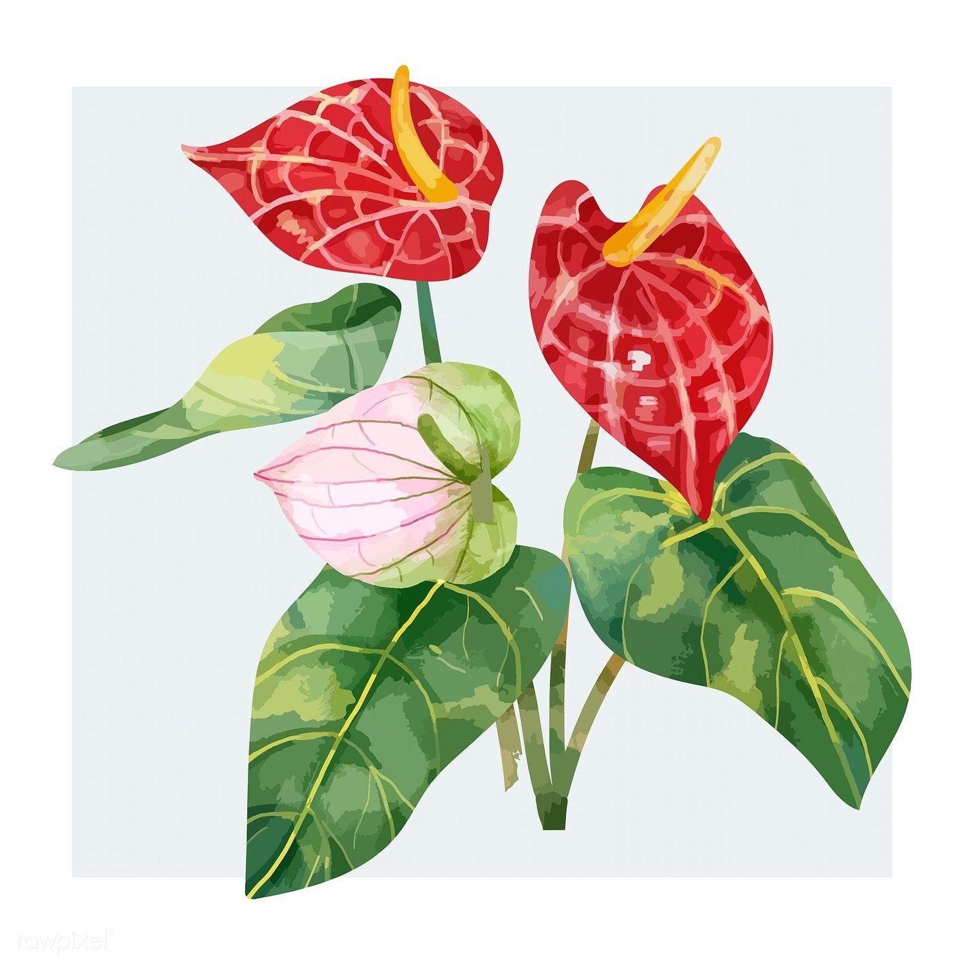 Download Premium Vector Of Hand Drawn Red Laceleaf Flower 421534 How To Draw Hands Illustration Flower Illustration