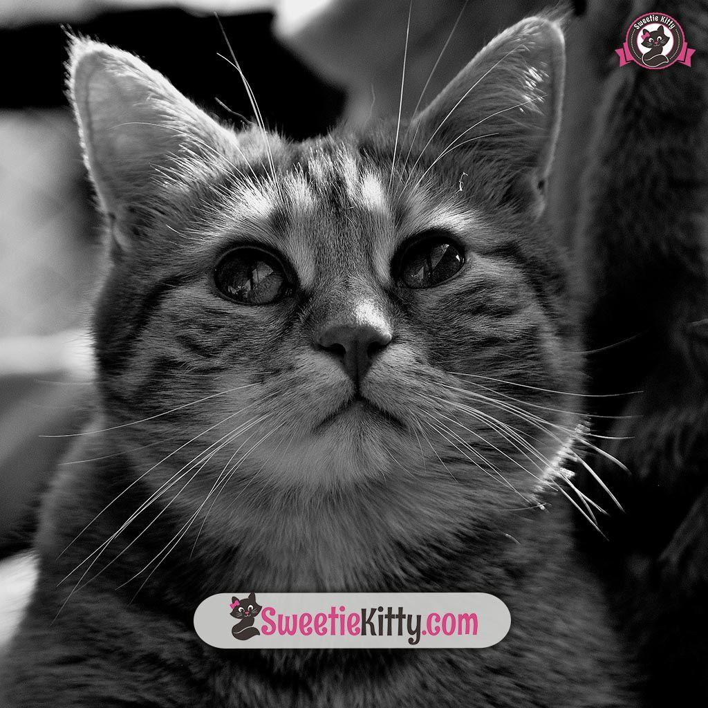 Free eBooks Bundle Kitty, Hug, Cats