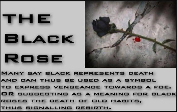 Black Rose Meaning Celtic Akasha Pinterest Flowers
