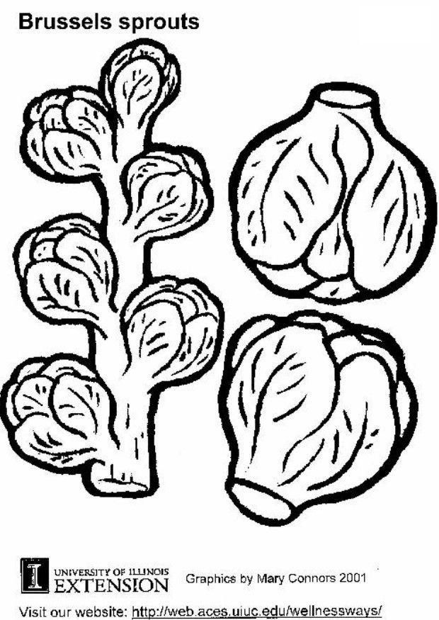 Sprout Coloring Pages | Coloring Pages | Rosenkohl und Rosen