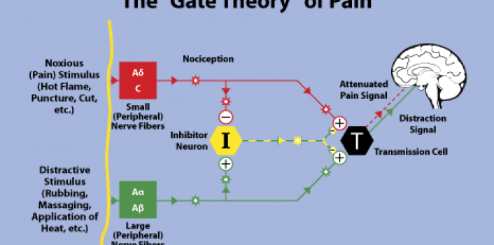 what is the gate control theory