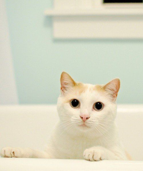 Do cats need baths? & 2. Contain the litter to prevent scatter. | Just For CATS ... Aboutintivar.Com