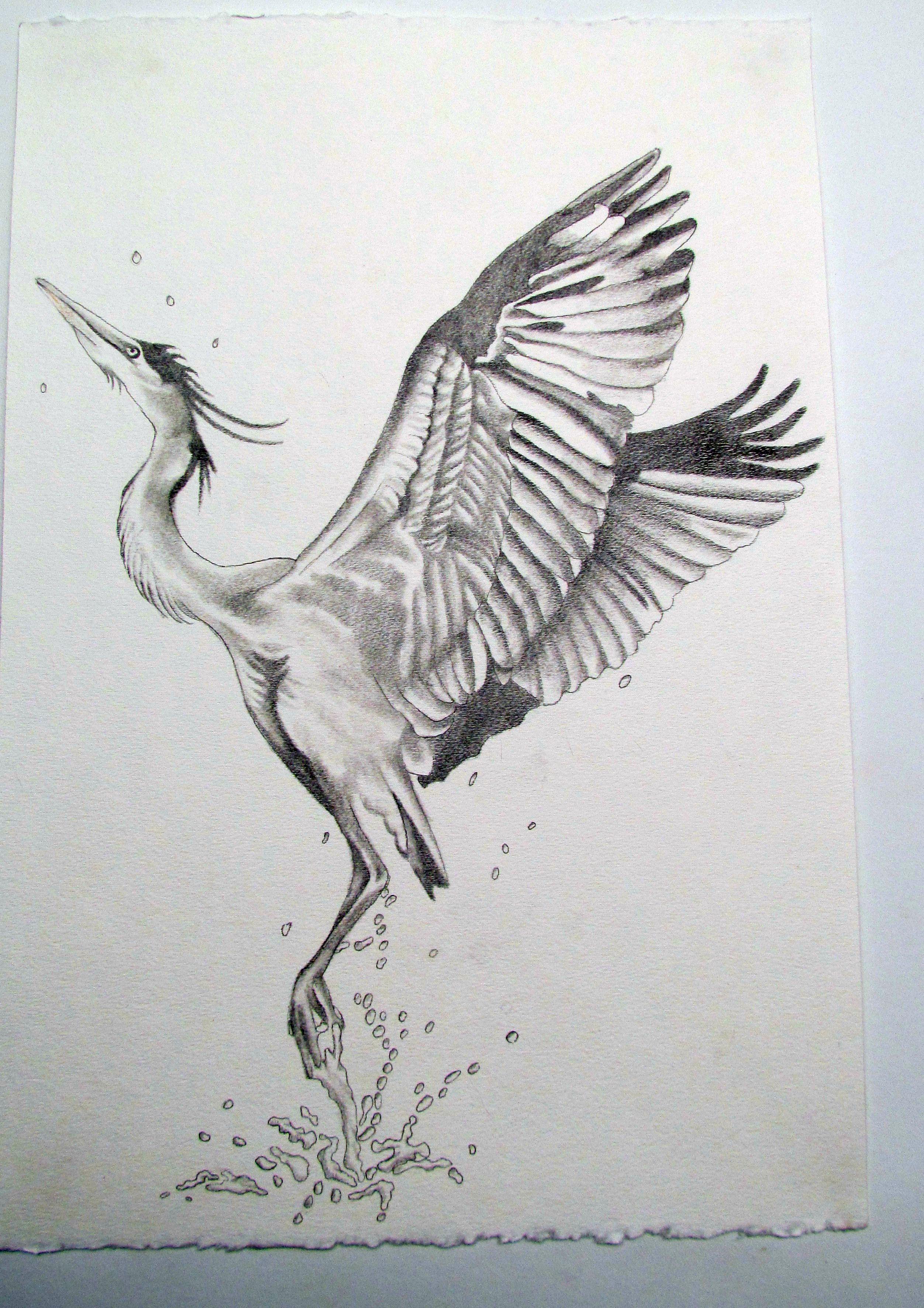 blue heron tattoo sketch tattoo future pinterest heron tattoo blue heron and sketches. Black Bedroom Furniture Sets. Home Design Ideas