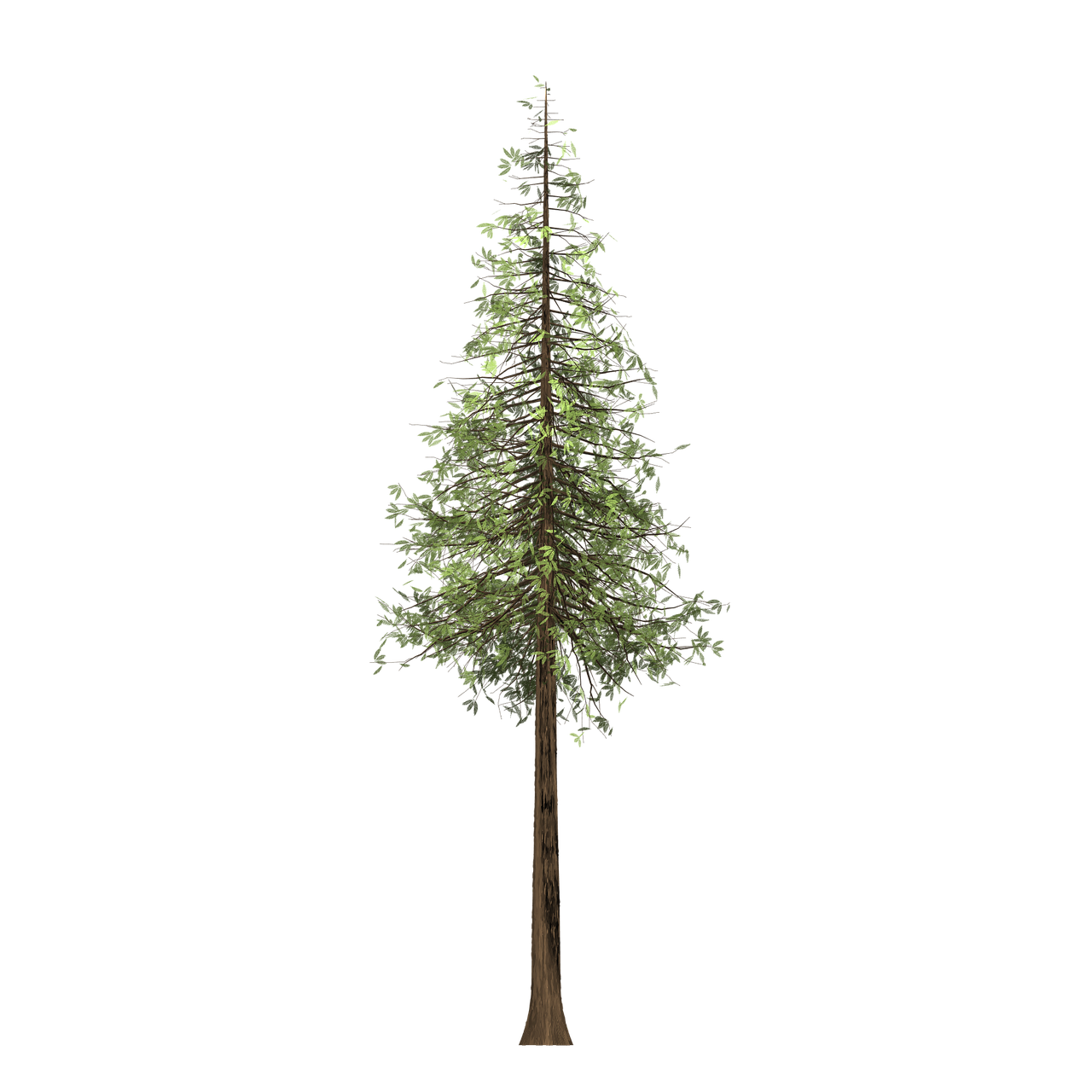 Forest Redwood Tree Painted Tree Green Nature Pla Forest Redwood Tree Painted Tree Green Nature Pla Redwood Tree Tree Care Tree Painting