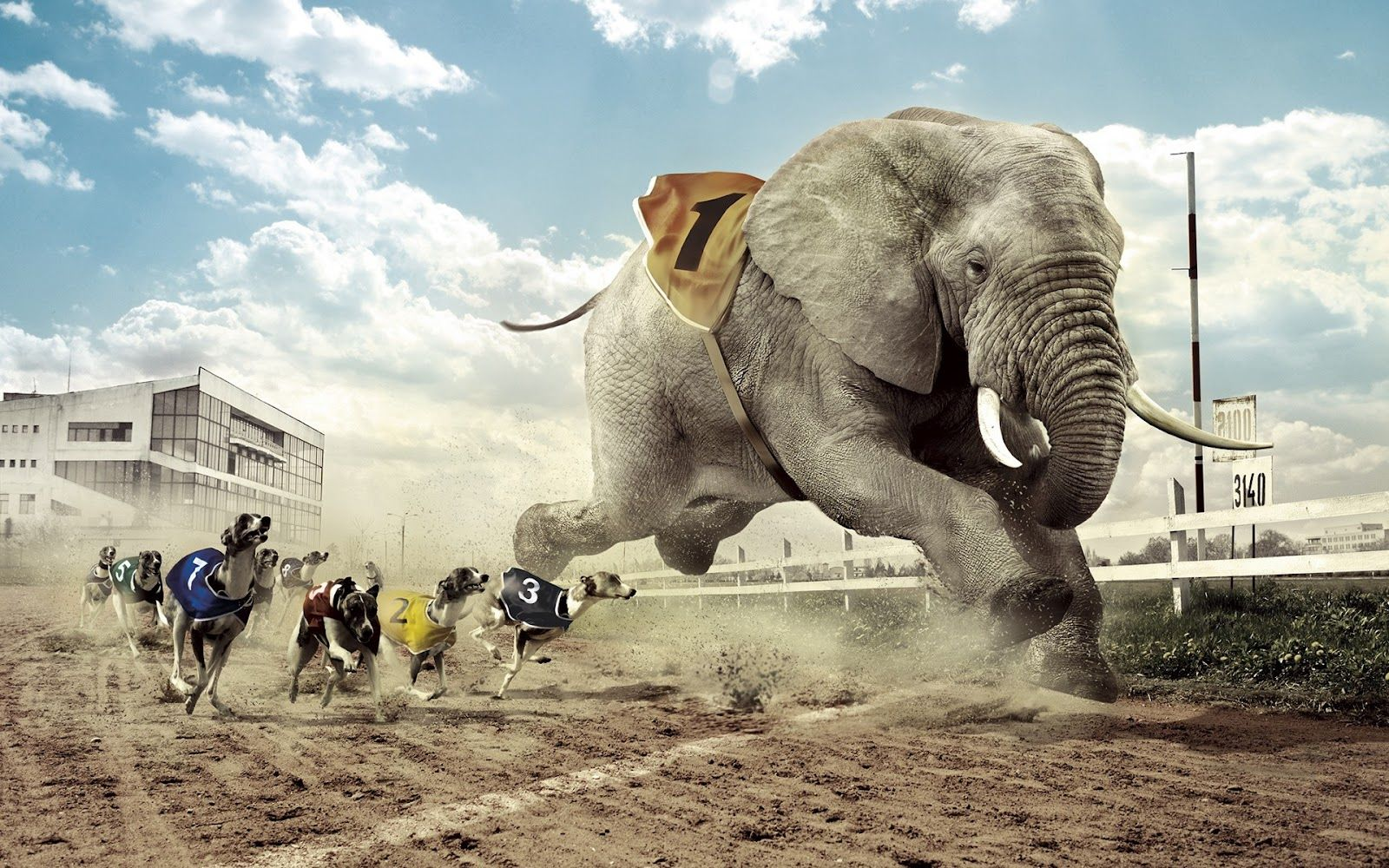 Dogs Vs Elephant Racing Photo Manipulation Hd Wallpaper