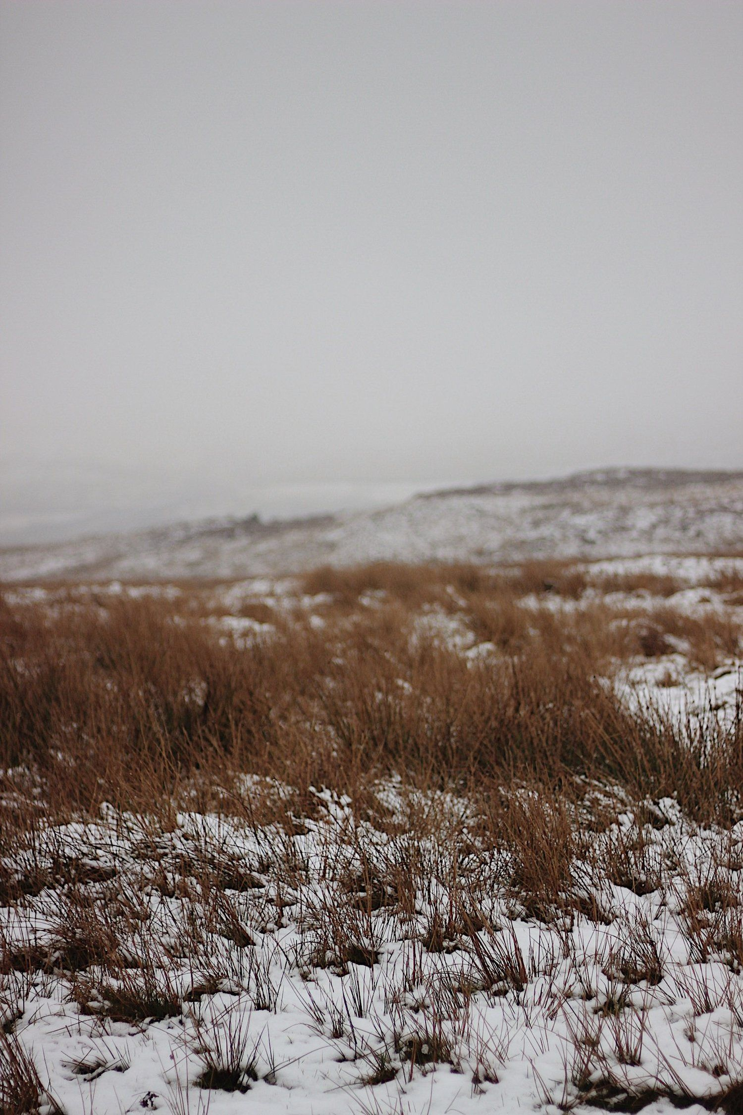 How I Make Money #winterlandscape