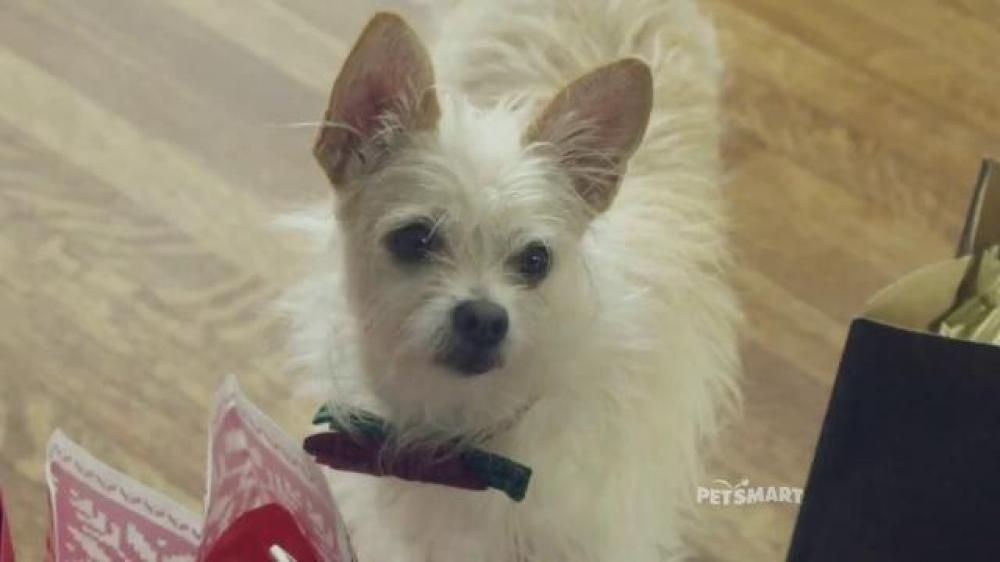 Petsmart November Weekend Sale Tv Spot Good Boy Song By Queen Pet Fish Pets Animals
