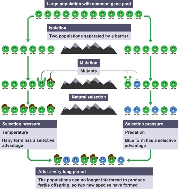 Revise Principles Of Evolution By Natural Selection For Gcse Biology Aqa Biologie