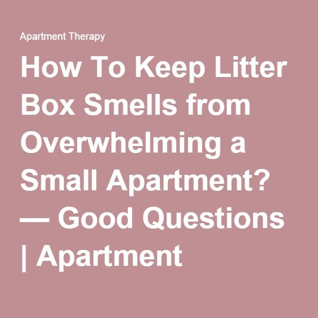 How To Keep Litter Box Smells from Overwhelming a Small Apartment ...