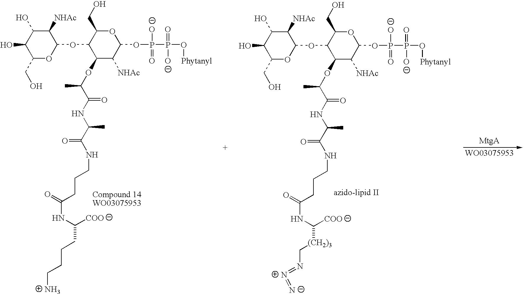 Polymer Of Lipids
