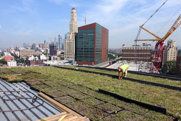 A Hive Of Activity Atop The Barclays Center Green Roof Ny Times Barclays Center