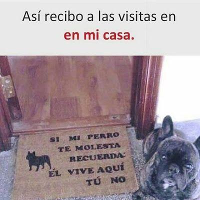 Whatveo Hola Firulays Que Hay De Nuevo Memes De Perros Chistosos Memes Perros Perros Chistosos