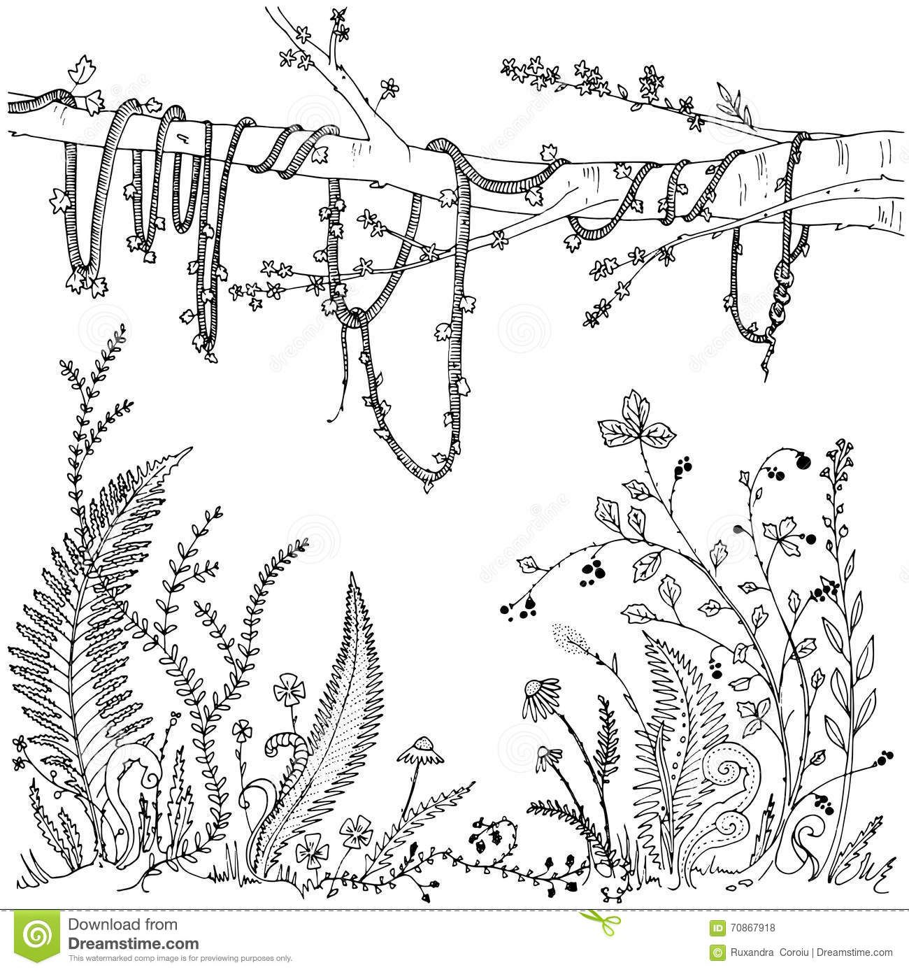 Ferns Flowers Vines And Berries In A Forest Dense Vegetation Printable Coloring Page For Adults Coloring Pages People Coloring Pages Flower Coloring Pages
