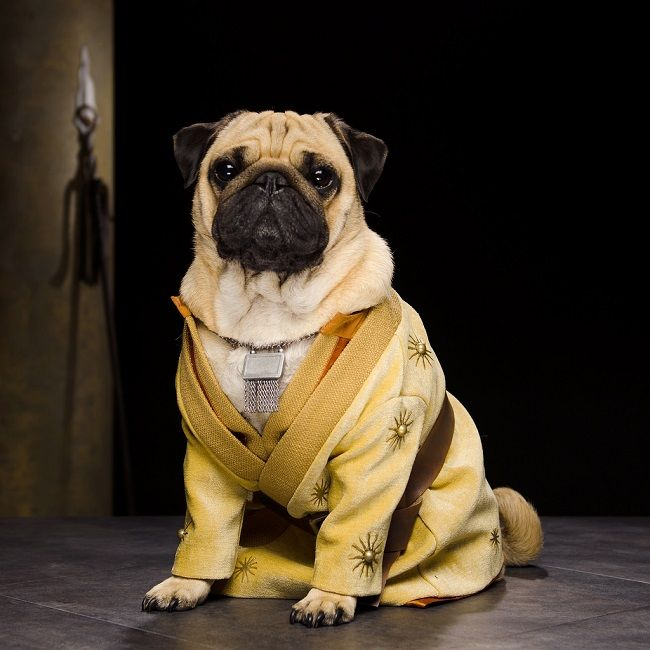 Important News For 'Game Of Thrones' Fans: Everybody's Getting Replaced With Pugs