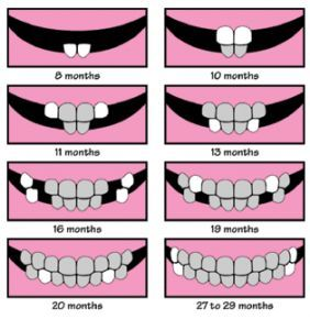 Easy to understand baby teeth chart! Great guide! # ...
