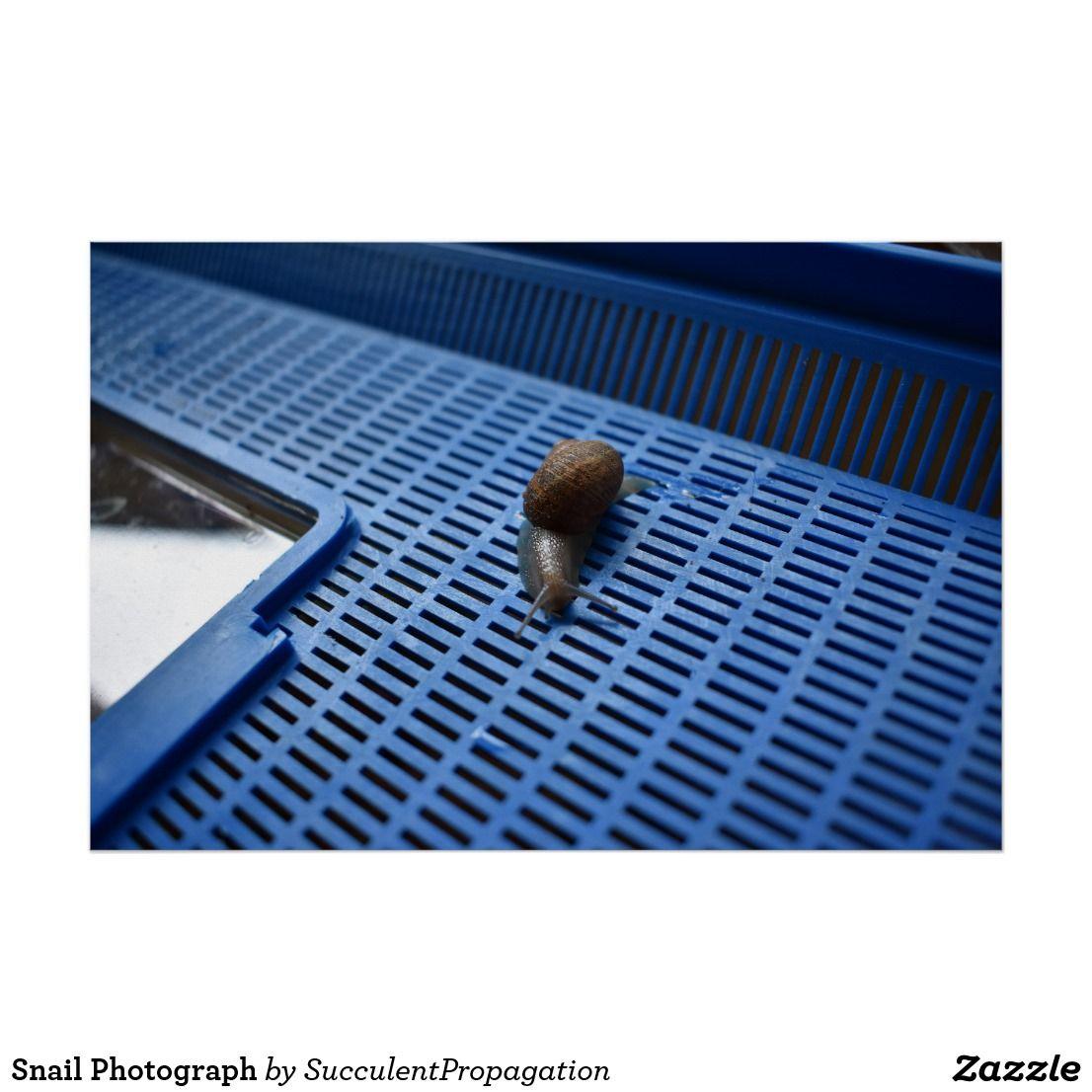 Snail Photograph Donkey Tail Garden Plant Home Decor Wall ...