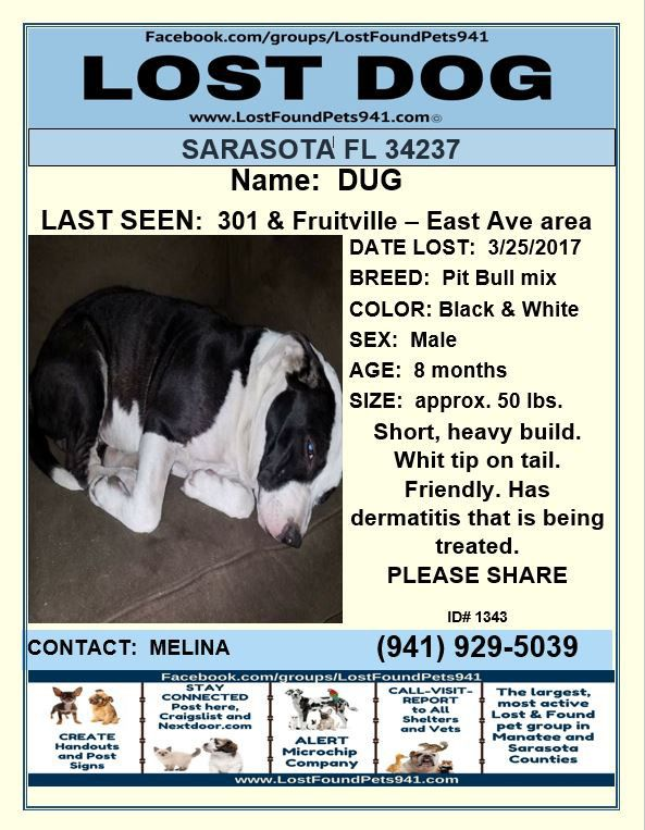 Have You Seen Dug With Images Losing A Dog Pitbull Mix