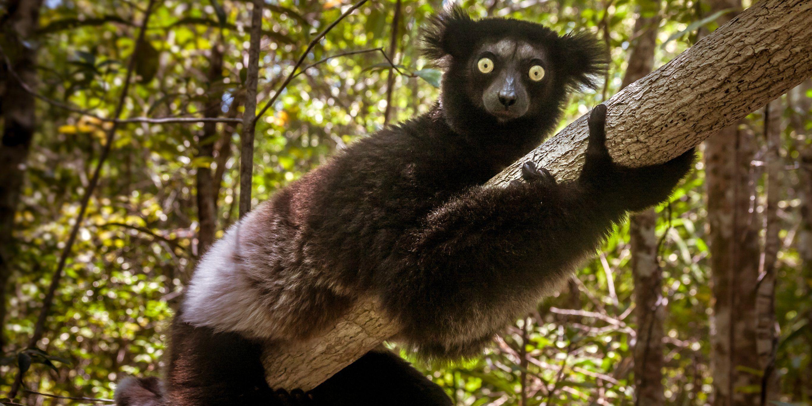Mammals And Their Habitats