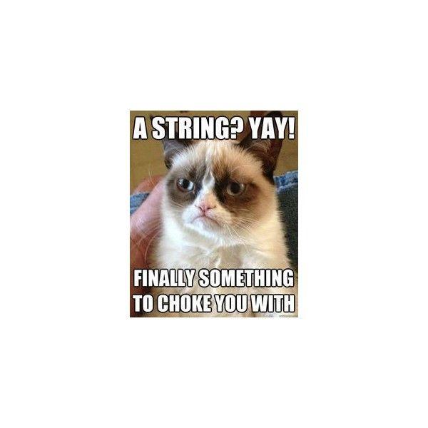 Grumpy Cat Meme Grumpycat Grumpy Cat Classic Meme Liked On Polyvore Featuring Meme Quotes Phrase Saying Funny Grumpy Cat Memes Funny Cat Memes Grumpy Cat The official instagram for grumpy cat. pinterest