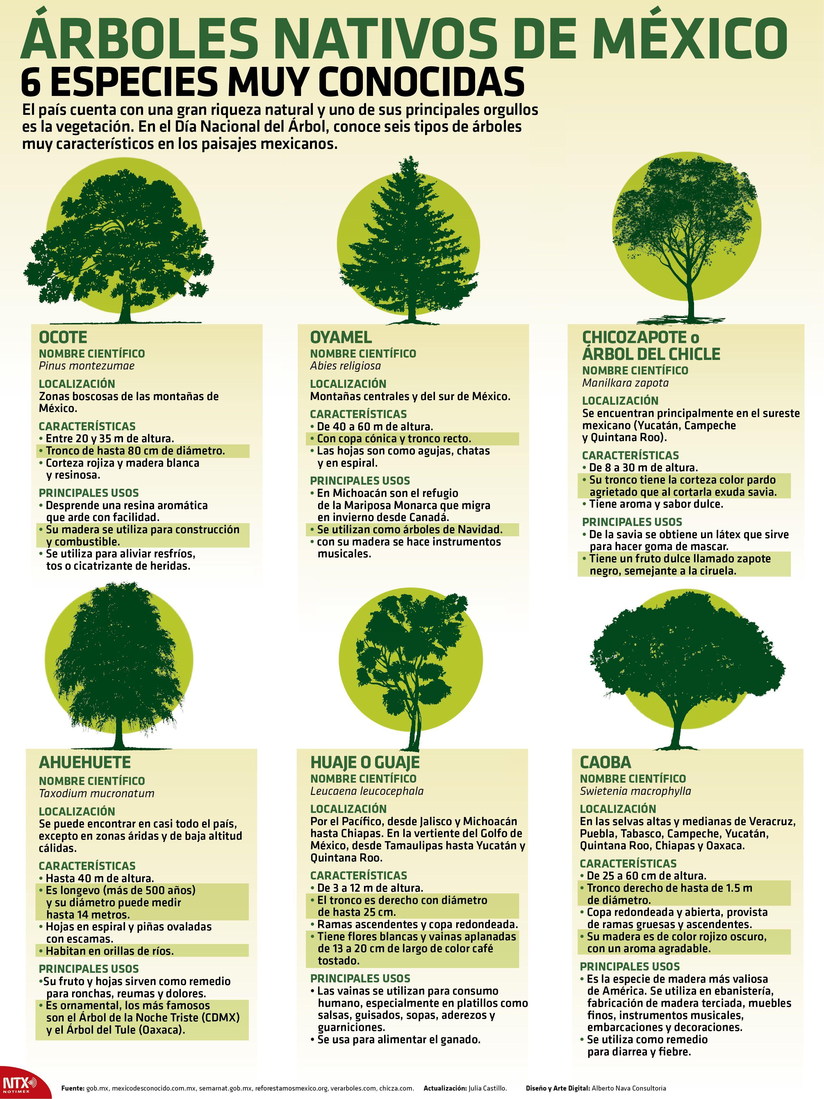 México Celebra Con Júbilo El Día Nacional Del árbol E