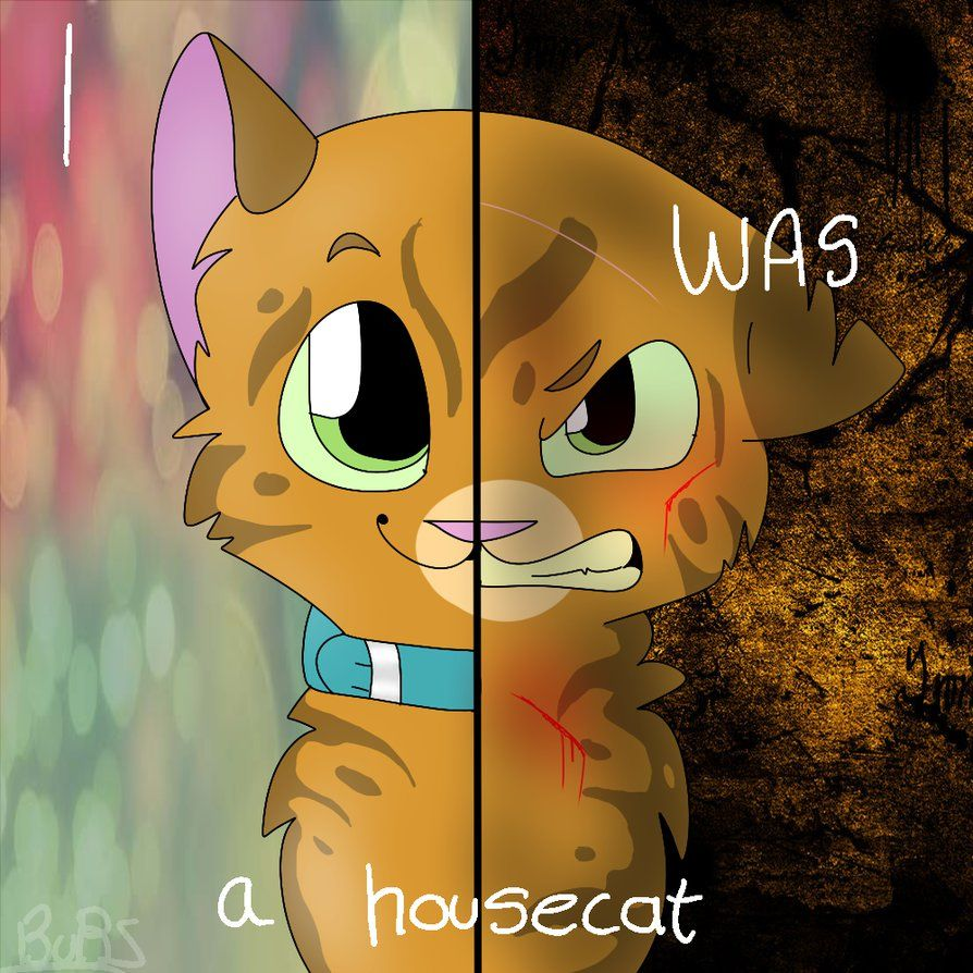 spottedleaf x firestar sad - Google Search | Warrior Cats | Warrior