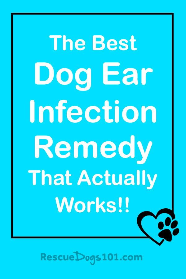 The Secret To Getting Rid Of Ear Infections In Your Dog At