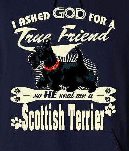Scottie friendship   Totally Terrier   Scottie dog, Scottish