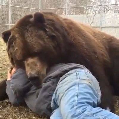 Who want to sleep with that bear 🐻 please follow Animals Board for more videos