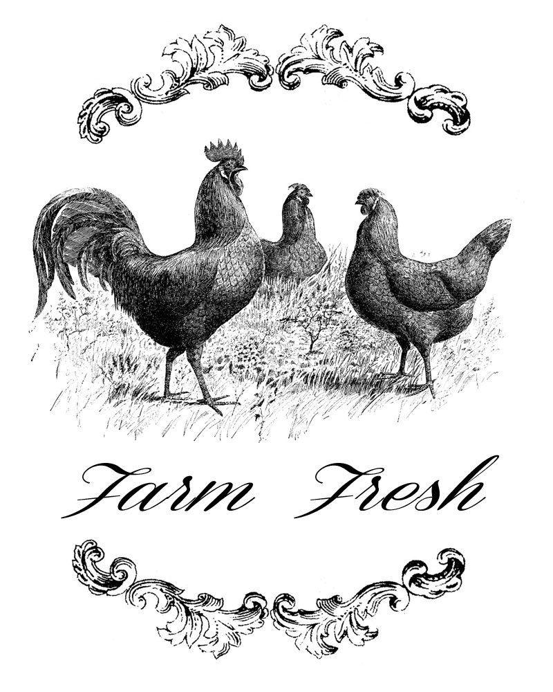 Farm Fresh Three Chickens Vintage Transfer Image, Chicken