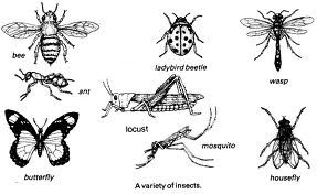 Insect Body Parts Coloring Pages