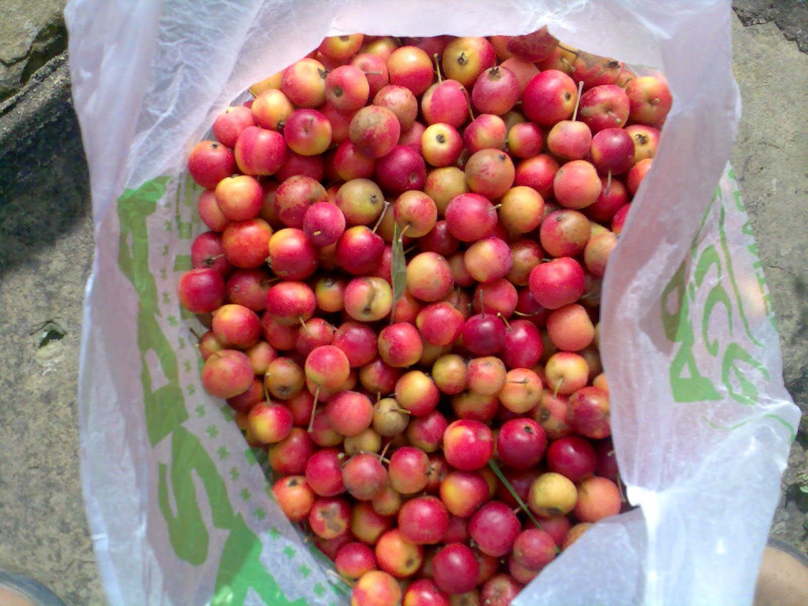 Echoes Of Summer I Think Our Crab Apple Tree Is Infected Or Infested Or Both Many Of The Apples Are Scabby Others Have Gone Rotten In Apple Wine Wine Drinks Wine