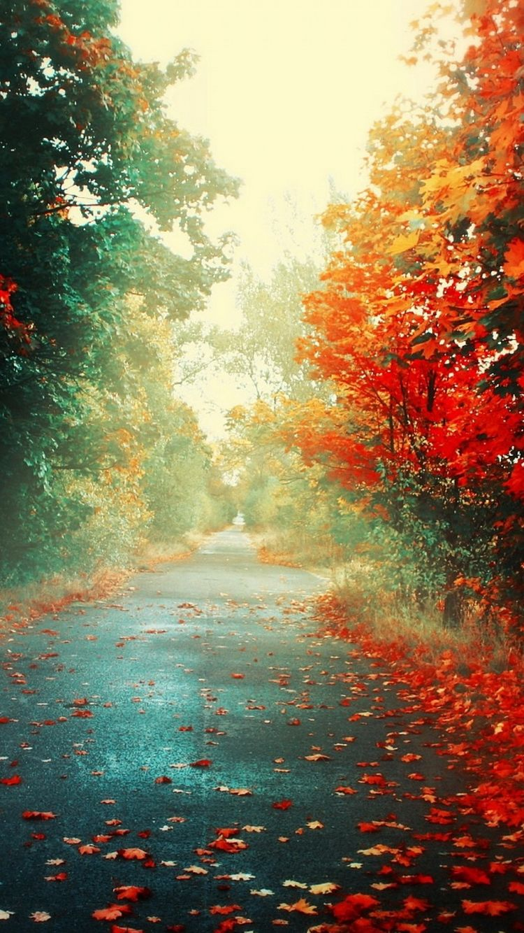 Download Red Trees Autumn Path iPhone 6 Wallpaper Fall