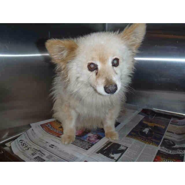 Urgent A 15 Year Old Tuffy Who Is Scared And Confused Poor Old Guy He Is At West Valley La Ca Shelter And Has To Animal Advocacy Cute Animals Shelter Dogs