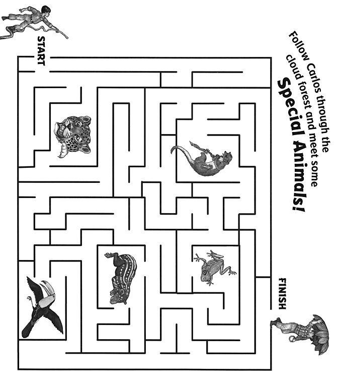 The Umbrella Maze | Lesson plan ideas for Brazil Culture Study ...