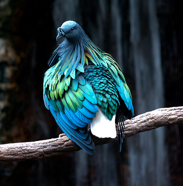 ZsaZsa Bellagio – Like No Other: cool birds.