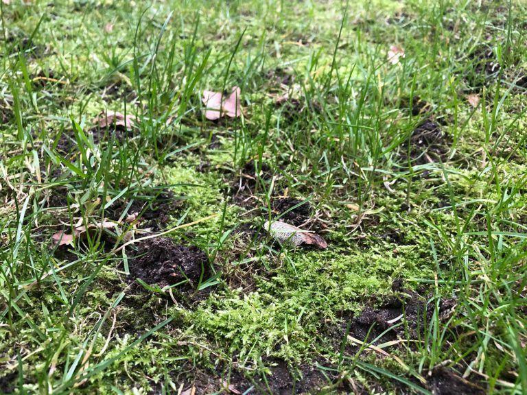 Maulwurf Vertreiben 3 Tipps Wie Sie Maulwurfe Loswerden In 2020 Maulwurf Vertreiben Klee Im Rasen Pflanzenwelt