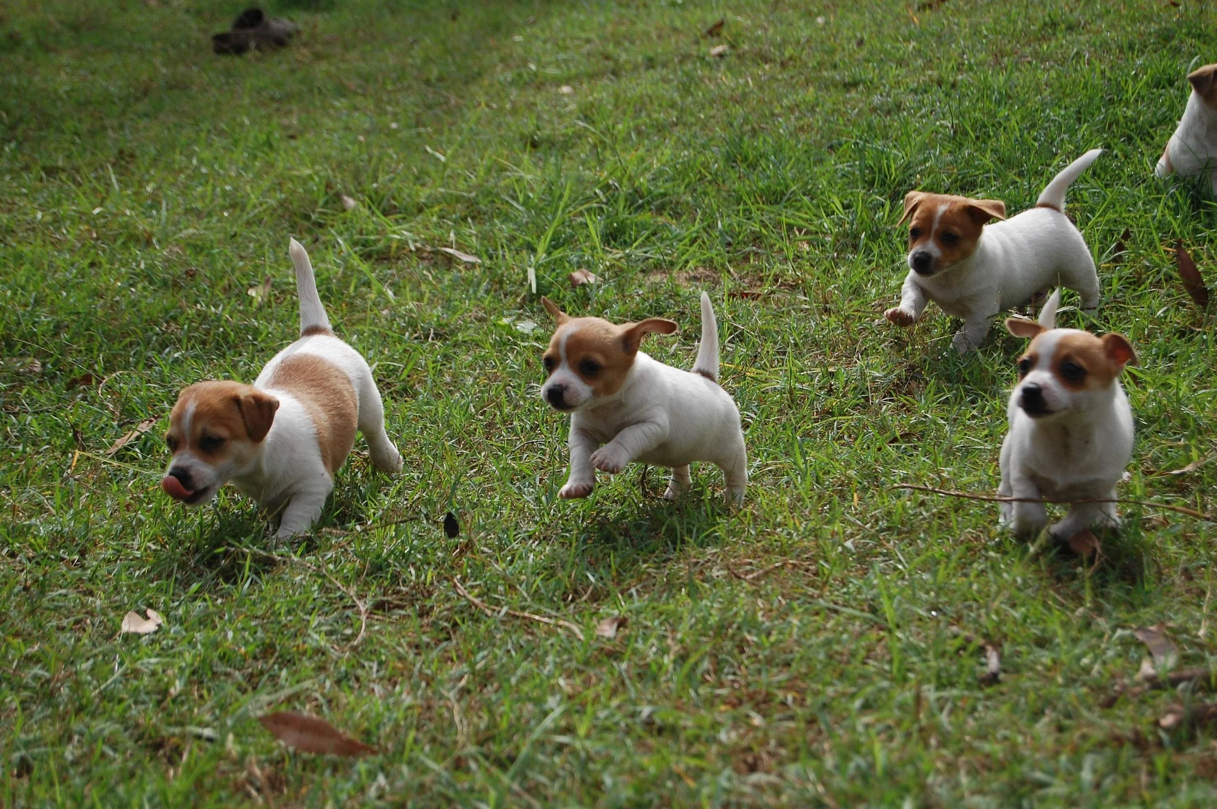 Cute Swarm Cute Animals Cute Puppies Dogs Puppies
