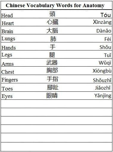 Anatomy vocabulary words