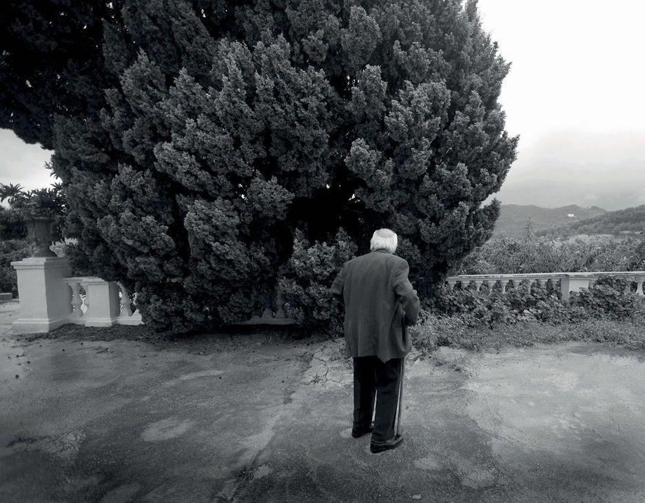 Estudios de escritores: Francisco Brines, 'El ciprés de Elca'