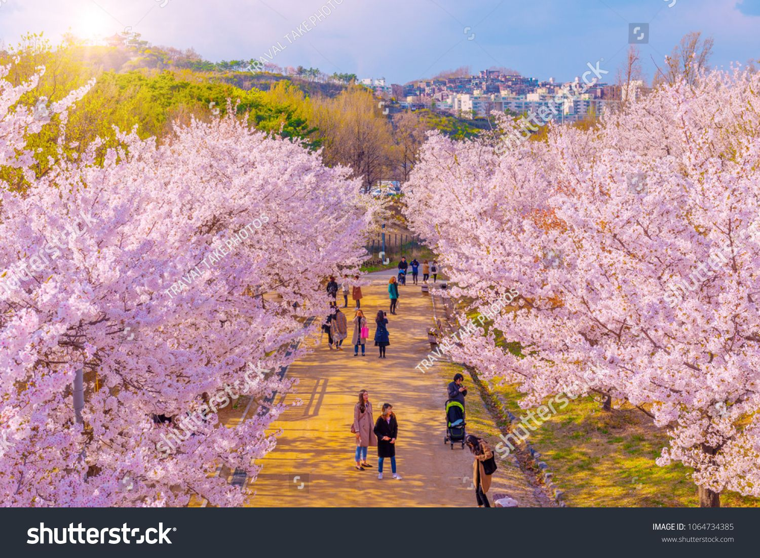 Seoul South Korea 7 April 2018 Cherry Blossom In Spring At Seoul Forest Park In Seoul South Korea Sponsored Aff Stock Photos Photo Editing Forest Park