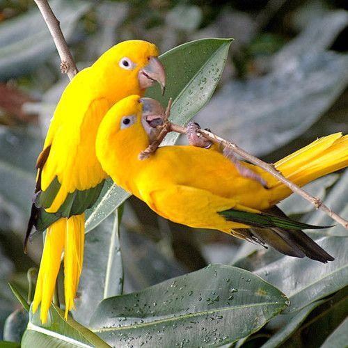 Beautiful Hd Wallpapers Of Birds
