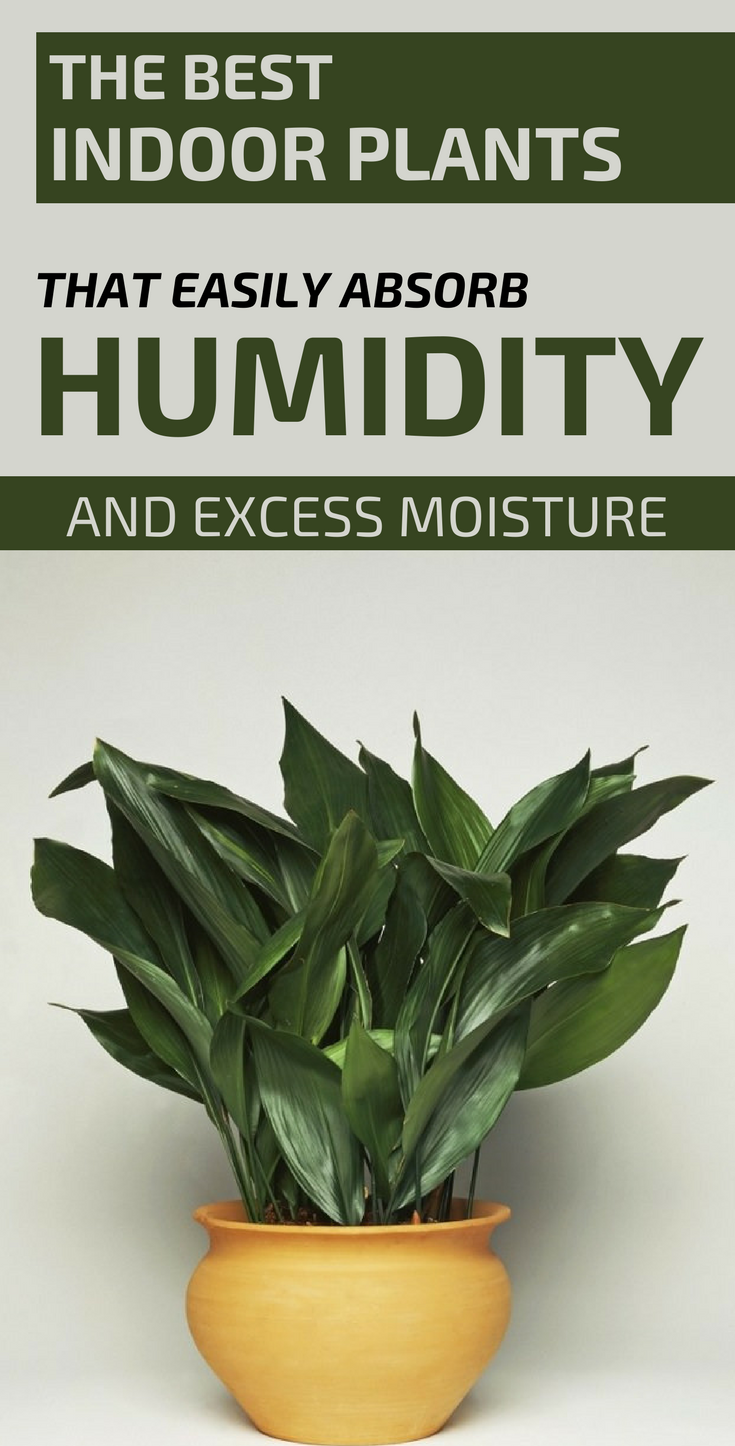 How To Get Rid Of Humidity Inside The House